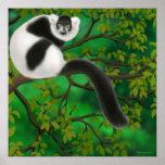 Black & White Lemur Poster