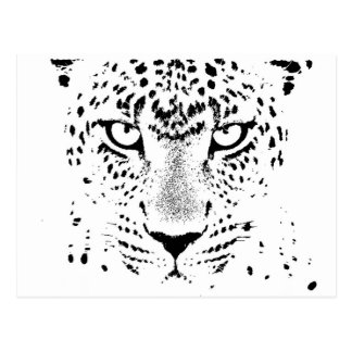 Black & White Leopard Eyes Postcard