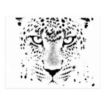 Black & White Leopard Eyes Postcards