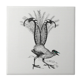 Black & White Line Drawing Lyre Bird Small Square Tile