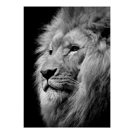 Black & White Lion / Animal Photography Art