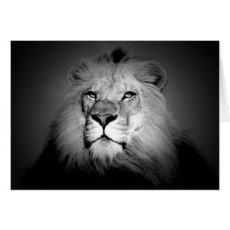 Black & White Lion Card