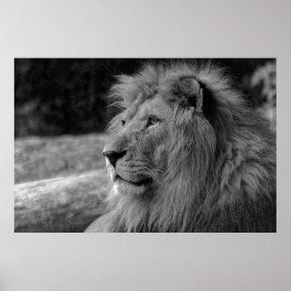 Black & White Lion - Wild Animal Photography Poster