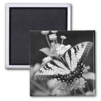 Black White Monarch Butterfly Magnet