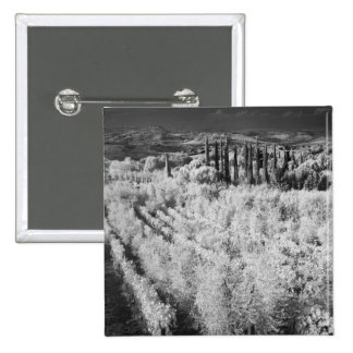 Black & White of vineyards, Montepulciano, Italy 15 Cm Square Badge