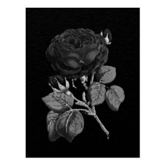Black&White Painted Abstract Rose Postcard