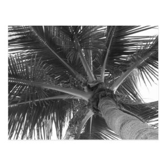 Black & White Palm postcard