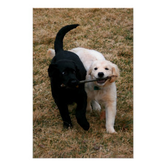 Black & white puppies canvas print