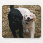 Black & white puppies mouse pad
