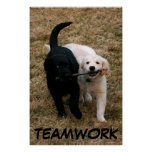 Black & white puppies poster