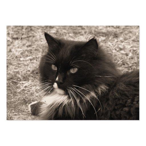 Black & White Rag doll Cat  Business Cards