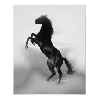 Black White Rearing Horse Freedom Poster