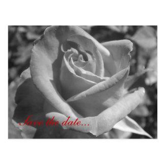 Black & White Rose Save the Date Postcard