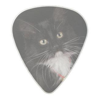 Black & white short-haired kitten,2 1/2 months acetal guitar pick