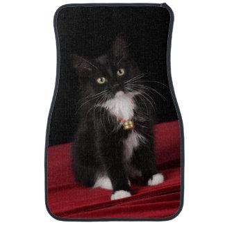 Black & white short-haired kitten,2 1/2 months car mat