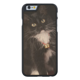 Black & white short-haired kitten,2 1/2 months carved® maple iPhone 6 case