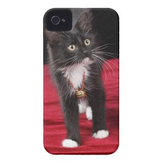 Black white short-haired kitten 2 1 2 months blackberry bold cases