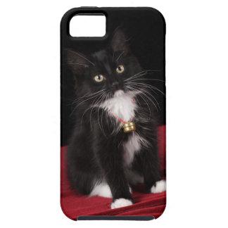 Black & white short-haired kitten,2 1/2 months tough iPhone 5 case
