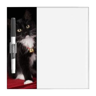 Black & white short-haired kitten,2 1/2 months dry erase board