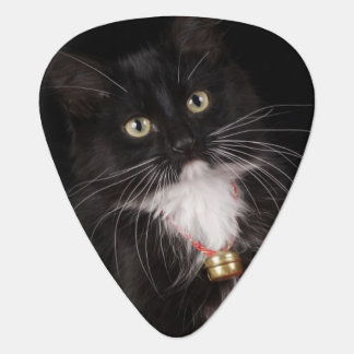 Black & white short-haired kitten,2 1/2 months guitar pick