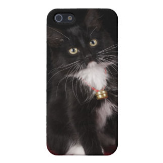 Black white short-haired kitten 2 1 2 months covers for iPhone 5