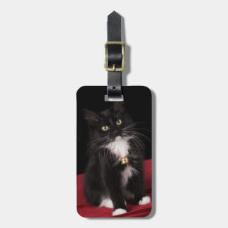 Black & white short-haired kitten,2 1/2 months luggage tag