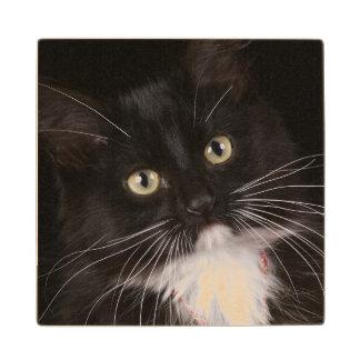 Black & white short-haired kitten,2 1/2 months wood coaster