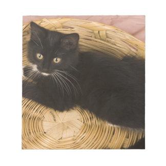 Black & white short-haired kitten on hamper lid, 2 notepad
