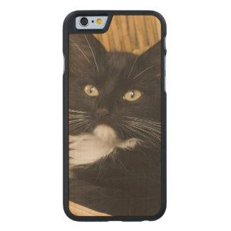Black & white short-haired kitten on hamper lid, carved® maple iPhone 6 case