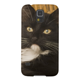Black & white short-haired kitten on hamper lid, galaxy s5 cover