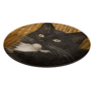 Black & white short-haired kitten on hamper lid, cutting board