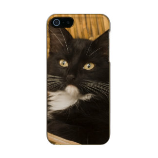Black & white short-haired kitten on hamper lid, incipio feather® shine iPhone 5 case