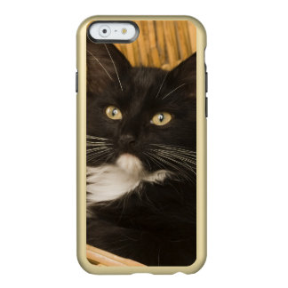 Black & white short-haired kitten on hamper lid, incipio feather® shine iPhone 6 case