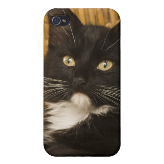 Black & white short-haired kitten on hamper lid, iPhone 4/4S case