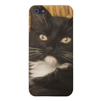 Black & white short-haired kitten on hamper lid, iPhone 5/5S cover