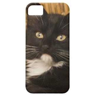 Black & white short-haired kitten on hamper lid, iPhone 5 case