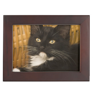 Black & white short-haired kitten on hamper lid, keepsake box