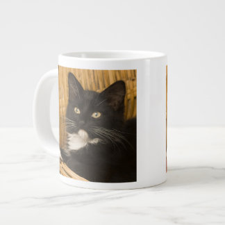 Black & white short-haired kitten on hamper lid, large coffee mug