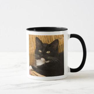 Black & white short-haired kitten on hamper lid, mug
