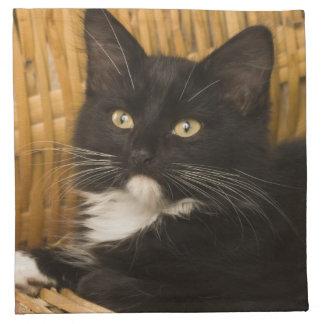 Black & white short-haired kitten on hamper lid, napkin