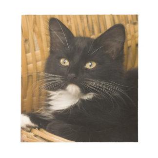 Black & white short-haired kitten on hamper lid, notepad