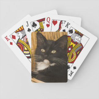 Black & white short-haired kitten on hamper lid, playing cards