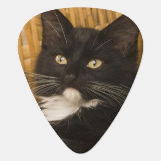 Black & white short-haired kitten on hamper lid, plectrum