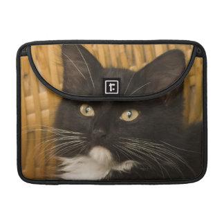 Black & white short-haired kitten on hamper lid, sleeve for MacBooks