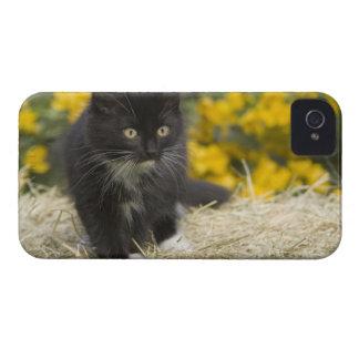 Black white short-haired kitten on hay bale 2 blackberry bold covers