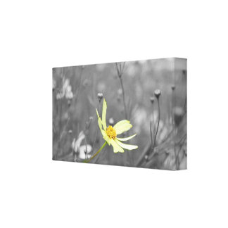 Black & White Stretched Canvas Prints