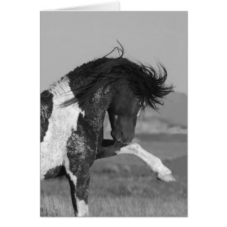 Black & White Strikes Out Wild HOrse Greeting Card