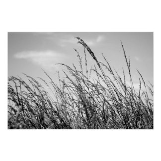 Black & White Tall Grass by David Cameron Paisley Poster