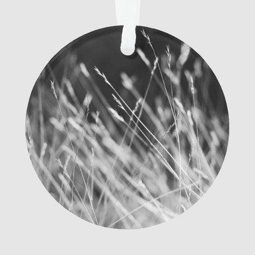 Black & White Tall Grass