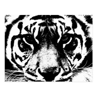 Black & White Tiger Postcard